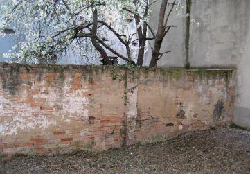 muro límite patio